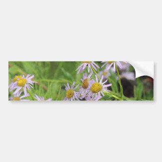 Fleabane daisy wildflower erigeron bumper sticker