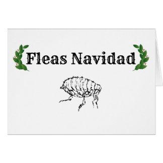 Fleas Navidad funny holiday greeting card
