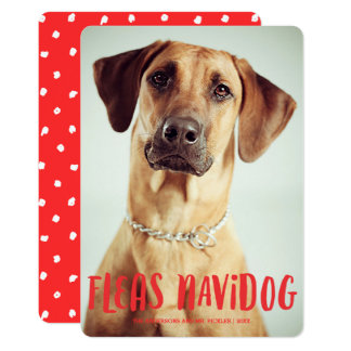 Fleas Navidog Cute Funny Dog | Holiday Photo Card