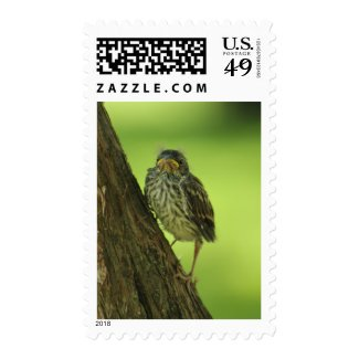 Fledging Chipping Sparrow Postage