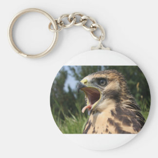 Fledgling Red Tailed Hawk Keychain