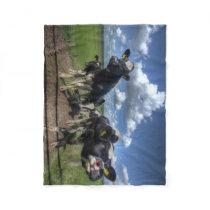 fleece blacket Cows