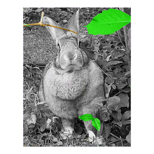 Flemish Giant Rabbit B & W with Green Leaves Posters