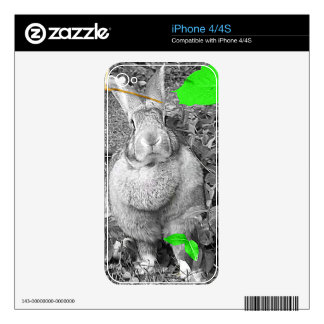 Flemish Giant Rabbit Black and White Green Leaves Decals For The iPhone 4
