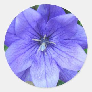 Fleur bleue en médaillon classic round sticker