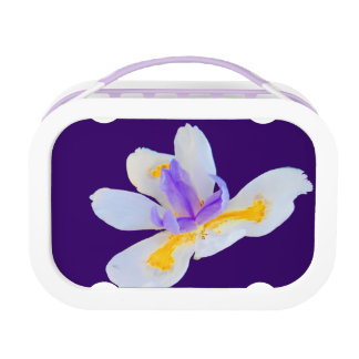 Fleur de Lis (Flower Of The Lily) Yubo Lunchbox