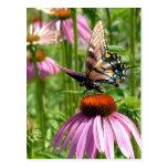 fleur del la del sur del papillon postal