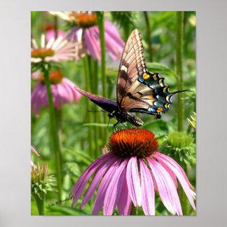 fleur del la del sur del papillon póster