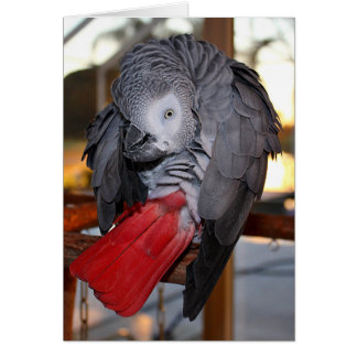 Flexible Congo African Grey Parrot with Red Tail Card