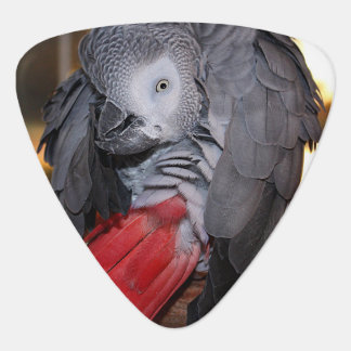 Flexible Congo African Grey Parrot with Red Tail Guitar Pick