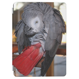 Flexible Congo African Grey Parrot with Red Tail iPad Air Cover