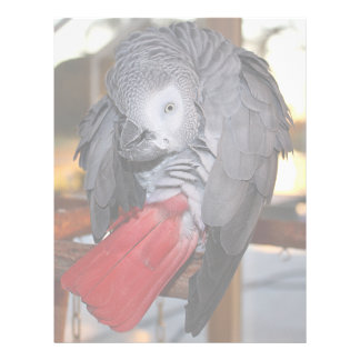 Flexible Congo African Grey Parrot with Red Tail Letterhead