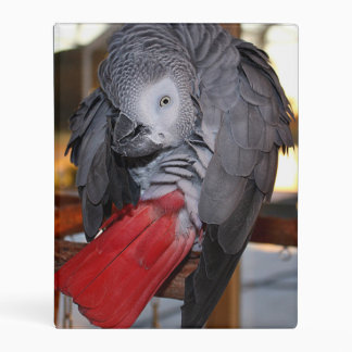 Flexible Congo African Grey Parrot with Red Tail Mini Binder