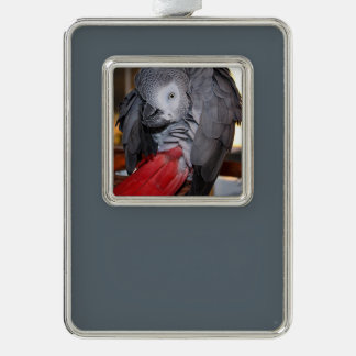 Flexible Congo African Grey Parrot with Red Tail Silver Plated Framed Ornament