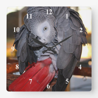 Flexible Congo African Grey Parrot with Red Tail Square Wall Clock