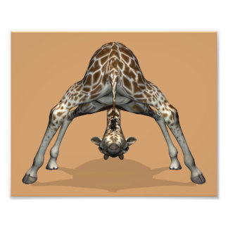 Flexible Giraffe Photo Print