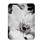 Flexible Magnet - White Clematis Flower