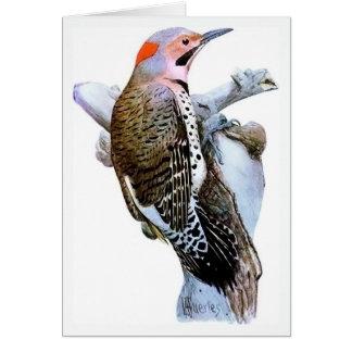 Flicker Bird Greeting Cards