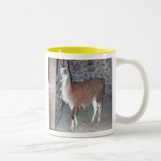 Flickertail en taza del granero
