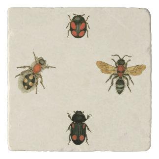 Flies and Beetles by Vision Studio Trivets