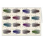 Flies / Fruit Flies from Diderot's Encyclopaedia Cards