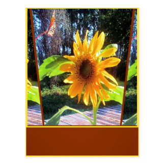 Flight Of Sunflower Butterfly Postcard