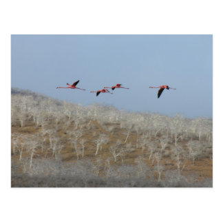 Flight of the flamingos post cards
