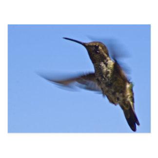 Flight of the Hummingbird Postcard