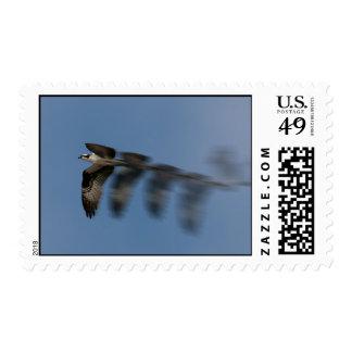 Flight of the Osprey Postage