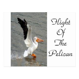 Flight of the Pelican Postcard