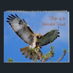 """Flight of the Red Hawk Calendar<br><div class=""""desc"""">A Digitalbcon Images Design featuring a collection of images of the &quot;Red-tailed Hawk- Buteo jamaicensis ssp.kriderii&quot;. The Red-tailed Hawk is probably the most widely recognized hawk found in North America. It is a large sized hawk and readily adapts to changing environment. These images were taken in southwest Saskatchewan,  Canada.</div>"""