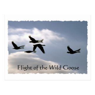 Flight of the Wild Goose - torn edges postcard