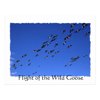 Flight of the Wild Goose - torn edges postcard