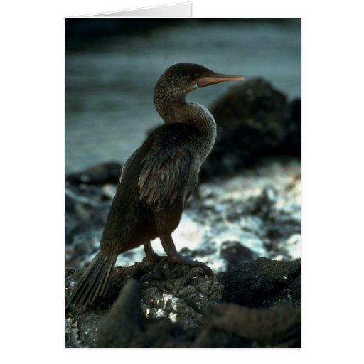 Flightless Cormorant Greeting Card