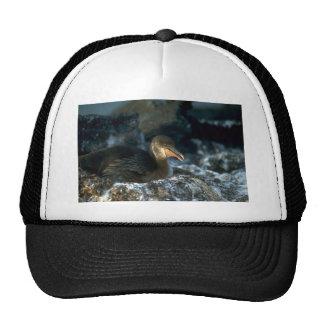 Flightless Cormorant on nest Trucker Hats