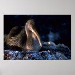Flightless Cormorant On Nest Posters