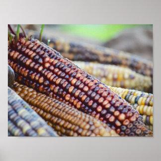 Flint Ornamental Corn Poster