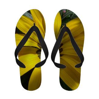 Flips-flopes amarillos del girasol chanclas