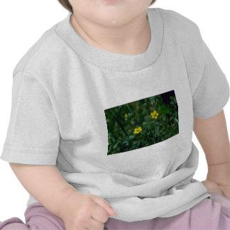 flo áspero amarillo del Cinquefoil Potentilla Nor Camiseta