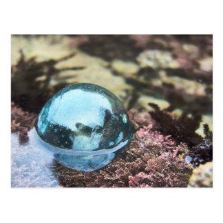 Float in tide pool postcard