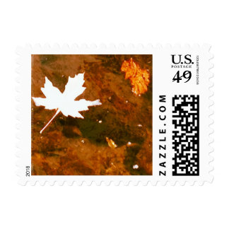 Floating Autumn Leaf / Fall Leaves Postage Stamps