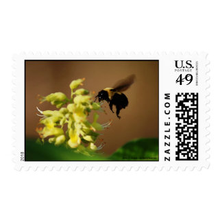 Floating Bumble Bee - Watercolor Style Stamp