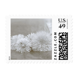 """Floating Dandelions on """"Water"""" Postage Stamps"""