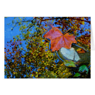 floating fall leaf on rock card