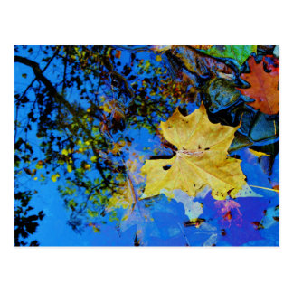 floating fall leaf with reflection of blue sky postcard