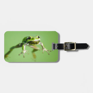 Floating frog in transparent and calm water . luggage tag