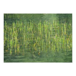 Floating Grasses Card