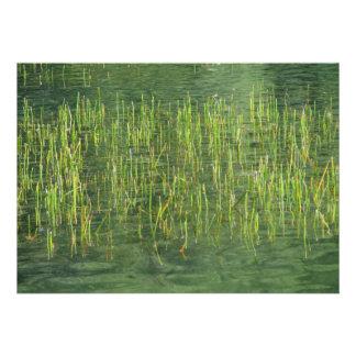 Floating Grasses Custom Announcements