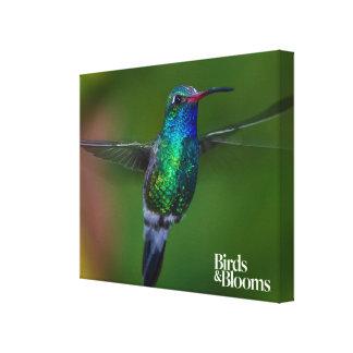 Floating Hummingbird Canvas Print