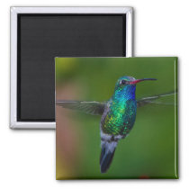 Floating Hummingbird Magnet